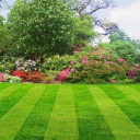 Lawns Are Green — But Are They Organic?