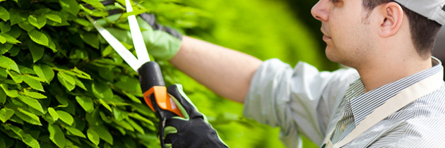 The Tools That Every Gardener Should Have