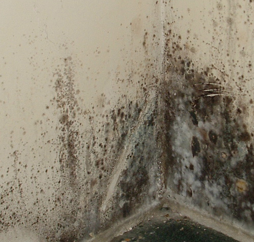 5 Tips for Battling Mold and Mildew in Your Home