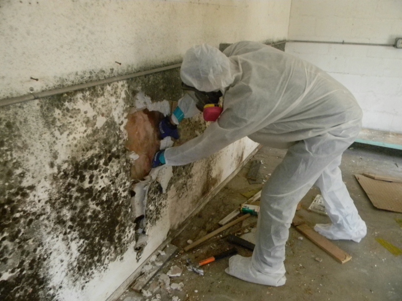 Top 4 Reasons Why You Need the Best Mold Removal Services
