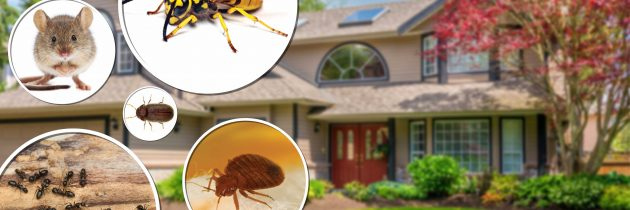 Best Tricks & Tips to Keep Away Pests from your Property