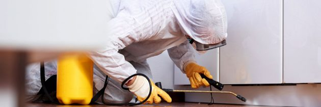 Questions you must ask your pest control company before an inspection